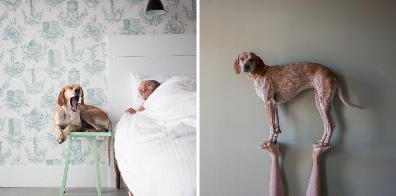 Maddie es conocida por su serenidad y paciencia mientras posa / Foto: Theron Humphrey