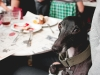 Rambo compartió mesa con nosotros - Bar Calders /Foto: Corina de Castro para Perricatessen
