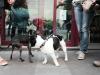 Rambo y su nuevo amigo el Míster en Bar Calders / Foto: Corina de  Castro para Perricatessen
