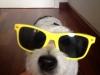 Los 9 Jack Russell Terrier viven como uno más - Bodegas Luis Pérez, Jerez /Foto: Perricatessen