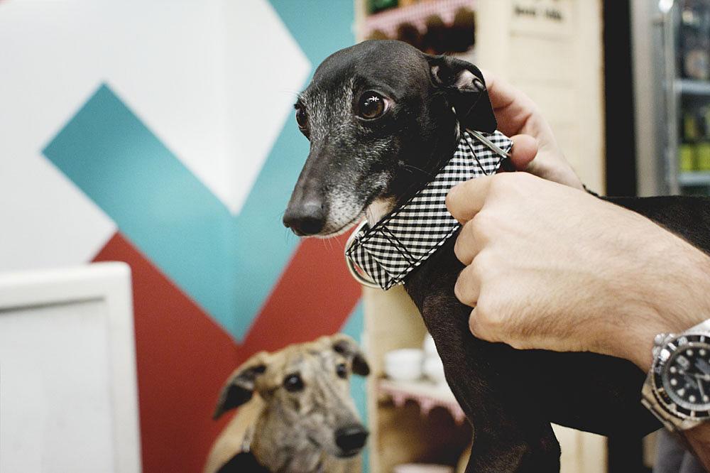 Brott mira como le probamos el nuevo Brott Collar a Rambo / Foto: Corina de Castro para Perricatessen