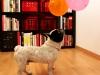 ¡Feliz ocho cumpleaños Bulli?