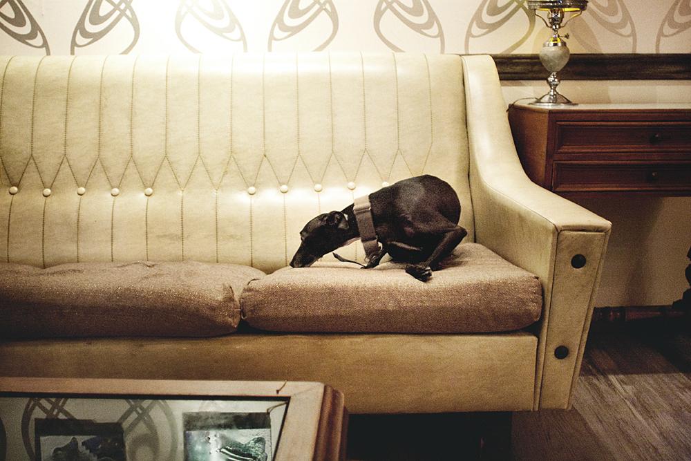 Rambo viendo qué tan cómodos son los sofás en Collage Bar / Foto: Corina de Castro