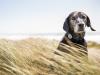 El collar Whistle permite adaptar la alimentación de tu perro a su ritmo de vida /Perricatessen