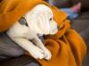 Los cachorros son muy activos y tienen un alto desgaste energético ¡Contrólalo!