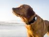 Ya no tendrás que adivinar qué darle de comer a tu perro: con este collar sabrás en todo momento sus necesidades