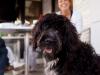 Tu perro estará feliz si te acompaña cuando vayas de restaurantes. Edúcale y comparte con él los mejores momentos. /Perricatessen