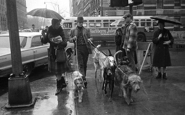 Jim paseando por Nueva York - Perricatessen/Foto de Neal Boenzi (New York Times)