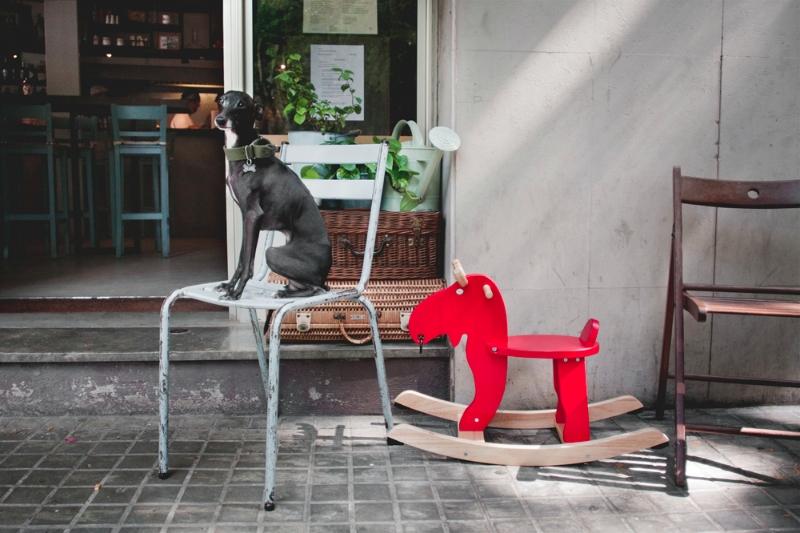 Rambo cómodo en su silla de Picnic luego del Primavera Dog-Sound. / Foto: Corina de Castro para Perricatessen