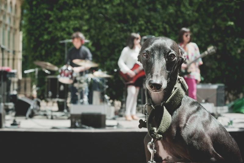 El Primavera Sound También es para perros / Foto: Corina de Castro para Perricatessen