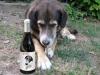 periicatessen_cangrauvell_vino_tramp_perro-jpg