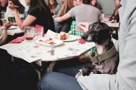 Perricatessen haciendo el dog-vermut en el bar calders