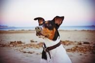Perro, mejor amigo del hombre y del vino /Perricatessen