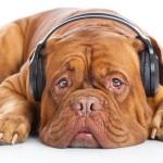 Recomendaciones para una dog-verbena la noche de San Juan