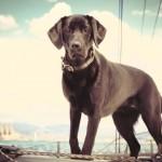 Navegando con tu perro