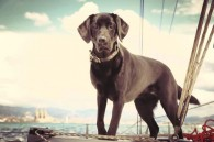Perricatessen - Navegar con tu perro