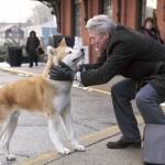 Dog-Personalities ¿quién es el protagonista?