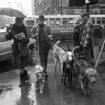 ¿Quién fue el primer paseador de perros profesional?
