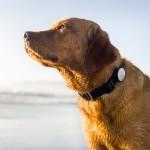 "Dog-fitness: llega el ""contador de pasos"" para perros"