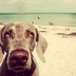 Destinos de playa dog-friendly