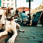 10 consejos dog-etiquette para ir de bares con tu perro