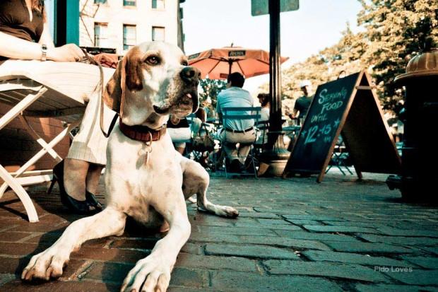 Las 10 normas básicas para salir de bares y restaurantes con tu perro