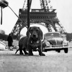 Dog-Travel: Viajar con nuestro perro