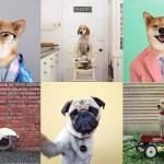 1, 2, 3 ¡DOG-PATATA!. Perros famosos en las redes sociales gracias a la fotografía