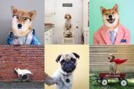 Dog-Patata Perros famosos en las redes sociales