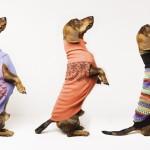 Pepito & Co: Moda para perros ecológica, de diseño, divertida y sobretodo resistente!