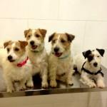 Bodegas Luis Pérez, vocación dog-friendly por los cuatro costados